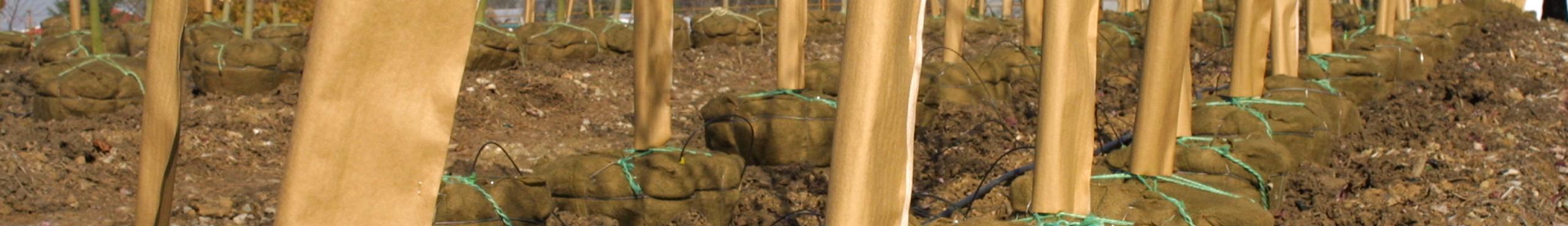 Nursery - Tree Wrap